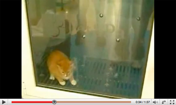 2007-kitty-washing-machine.