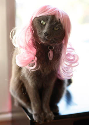 2007-kitty-wig.