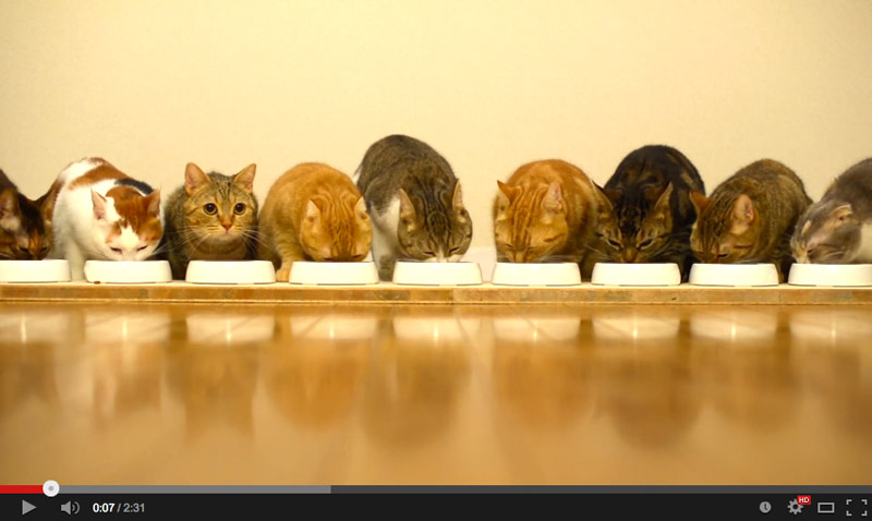 9 cats to eat side by side