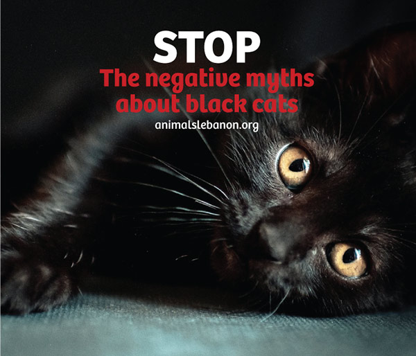 Black cats negative myths