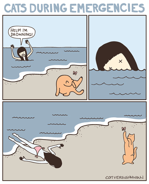 cat-during-emergencies.