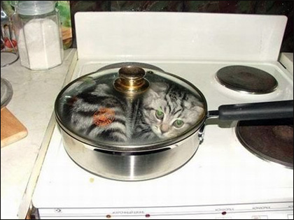 Cooking a cat.