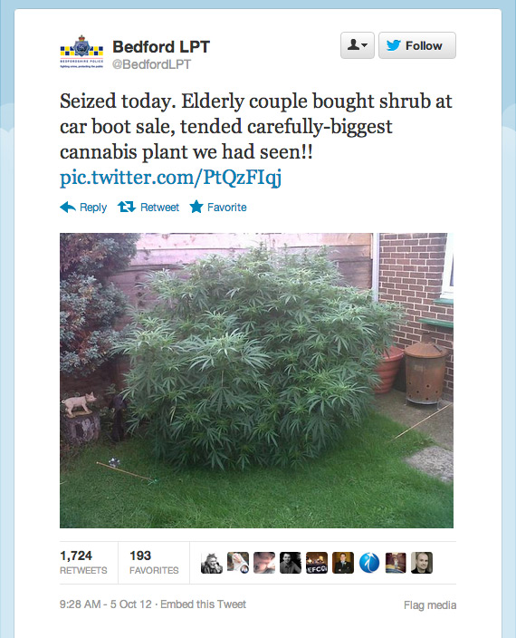 Seized today. Elderly couple bought shrub at car boot sale, tended carefully-biggest cannabis plant we had seen!