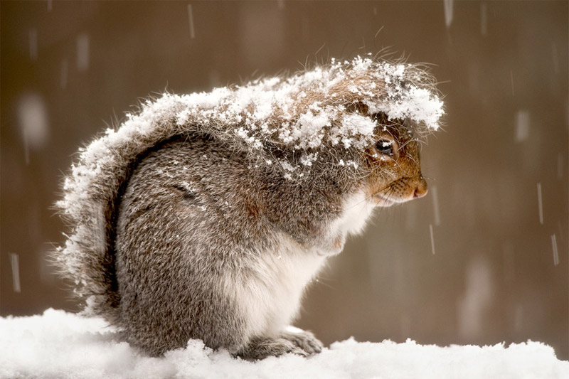 snowy-squirrel-2012.jpg